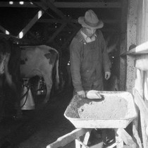 Feeding According to Production, A.J. Bianchi, Point Reyes Station, Marin County, March ...