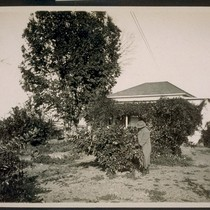 Cottage showing orange trees on land near Rivergarden Farms