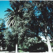 1975 Slide Show: Cultural Landmarks of South Pasadena: Bridge from South Garden