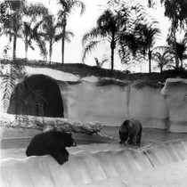 Bear enclosure at San Diego Zoo