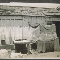 [Makeshift shelter for Indian or other South Asian farm laborer.]