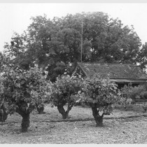 (4 miles east of Lodi.) Farm home of laborer of Japanese ancestry. ...