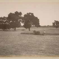 Cutting Hay, on Land of Sonoma Valley Improvement Company, at El Verano. ...