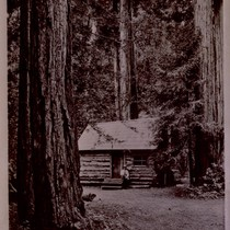 Ben Johnson cabin in Muir Woods, 1938 [postcard negative]