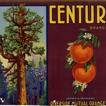 "Crate label, ""Century Brand."" Grown and Packed by ""Riverside Mutual Orange Co."""