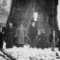 1800s Gathering by Giant Sequoia Tree, Tulare County, Calif