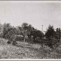 Abandoned orange orchard at southeast corner of Doran Street and Grove Place, ...