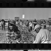 United Farm Worker's strike in Delano (Calif.)