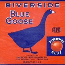 "Crate label, ""Blue Goose."" Riverside Blue. Distributed by American Fruit Growers Inc. ..."