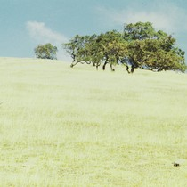 Mount Burdell, Marin County, 1977 [photograph]