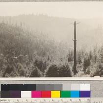 159256 Forest Service. Redwood cutover land with eucalyptus plantations of about 1911. ...