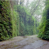 Fern Canyon, Prairie Creek Redwoods State Park
