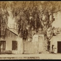 """37. The Old and the New of Los Angeles, Showing Pepper Trees ..."