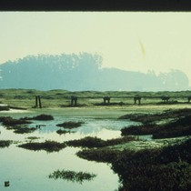 Marin County Parks Department staff at Bothin Marsh, 1974 [photograph]