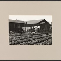 Number 44 - Group 2. April 18, 1942, Mountain View, California. Japanese ...