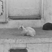Black and white cats on porch, from Walnut Grove: Portrait of A ...