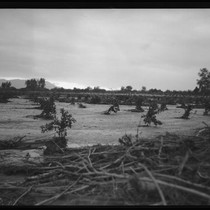 Agricultural field with mud and plant debris after the flood caused by ...