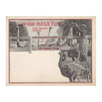 "Cawston Ostrich Farm Advertisement Card: ""Strangest Sight in America"" (Front)"
