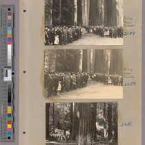 Album page with photographs of Bolling Grove dedication, Humboldt Redwoods State Park