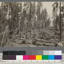 1916 cutting, U.S. Forest Service timber sale to Spanish Peak Lumber Company ...
