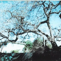 1975 Slide Show: Cultural Landmarks of South Pasadena: Ashbourne/ Chelten Hybrid Oak, ...