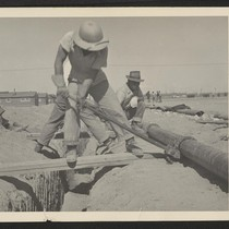 Young volunteer workers, residents at the Topaz Relocation Center, completing the water ...