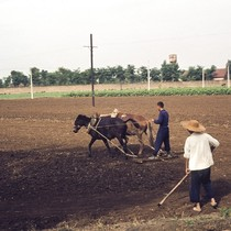 Agricultural Work Powered by Draft Animals