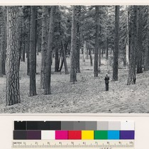 1 mile northwest of Butte Lake. Semidense old growth (3) stand of ...