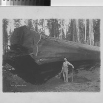 [Alex McLaughlin standing next to redwood log]
