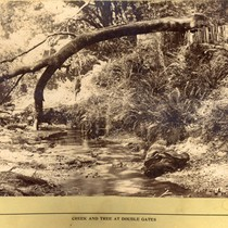 A creek and fallen tree at Double Gates, Bear Valley, Marin County, ...
