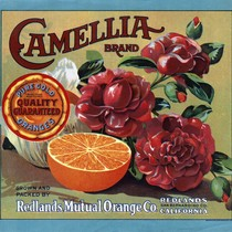 "Crate label, ""Camellia Brand."" Pure Gold Quality Guaranteed Oranges"