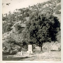 Bidwell Orange Tree at Bidwell Bar, Butte County. The attached photograph was ...