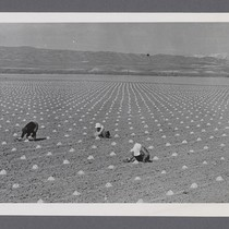[Agricultural workers]