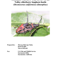 Assistance with the 5-Year Review of the Valley Elderberry Longhorn Beetle (Desmocerus ...