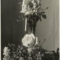 An arrangement of roses