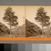 1,000 Mile Tree, Weber Canyon [Utah]. Watkins' Union Pacific Railroad
