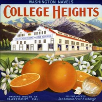 "Crate label, ""College Heights."" Washington Navels"