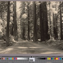 Redwood Highway in North Dyerville Flat
