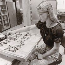 Photograph of student working with butterflies in a laboratory