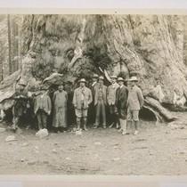 [John Muir and Theodore Roosevelt in Mariposa Big Tree Grove.]