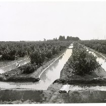 Irrigation canals in a San Jooaquin Valley grape vineyard