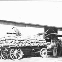 Bags of Sheep Wool Being Loaded on Trucks