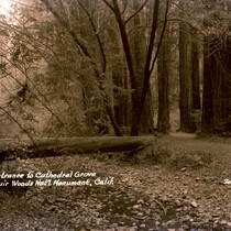 Entrance to Cathedral Grove in Muir Woods, 1941 [postcard negative]