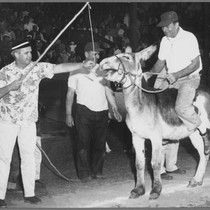 4th of July Donkey Baseball, ca. 1960