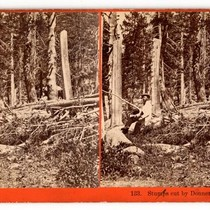 Stumps cut by Donner Party in 1846, Summit Valley. # 133.