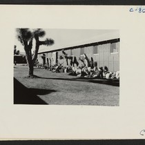 Manzanar, Calif.--A view of the garden strip arranged by William Katsuki, former ...