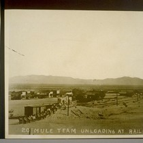 20 Mule Team unloading at railroad in Daggett, Cal., after its long ...