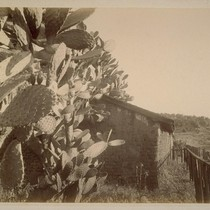 Cactus and Old Adobe, Lachryma Montis