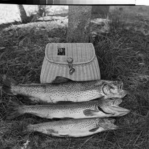 21-Lbs. of Fish at Medicine Lake Lodge, Medicine Lake, Calif. 11-Lb. 6-Lb. ...