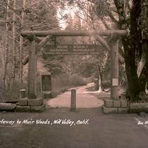 Entrance gate to Muir Woods National Monument, 1935 [postcard negative]